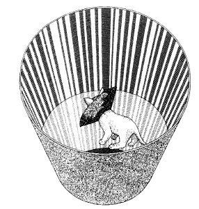 A kitten raised in a vertically-striped environment. Image taken from Blakemore, C., & Cooper, G. F. (1970). Development of the brain depends on the visual environment. Nature (228), 477-478
